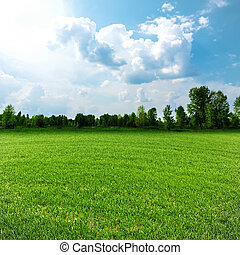Sunny day on the meadow, environmental backgrounds for your design