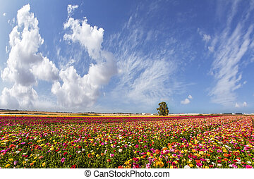 Sunny day - Sunny lovely day in the south of Israel....