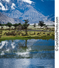 Sunny day view with trees at Nubra Valley