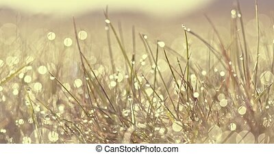 Sunny day with dew - Summer morning on meadow. Close view on...