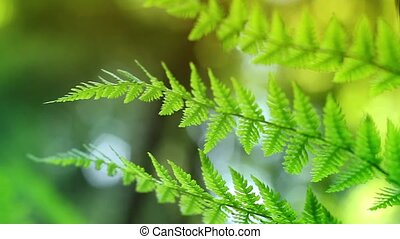 Sunny Ferns Closeup Loop - Macro shot of fern plants in the...