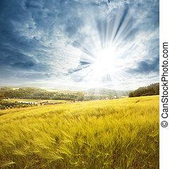 Sunny field