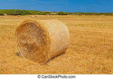 Sunny field with big hay bale