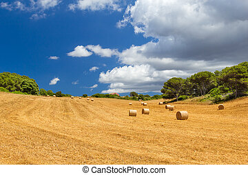 Sunny field with hay bales