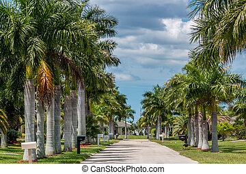 Sunny Florida - Beautiful palm trees perfectly lined up on...