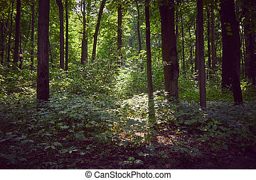 Sunny glade in the forest