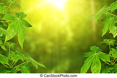 Sunny green background with leaves of tropical plant