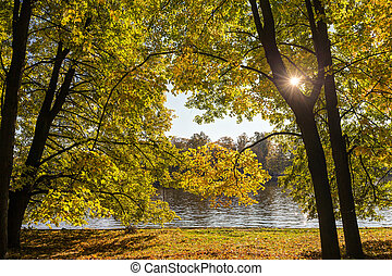 sunny landscape in the autumn park