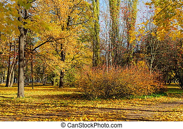 sunny landscape in the park
