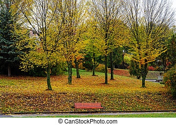 landscape in the park with autumn trees