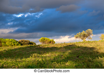 Sunny Landscape with trees and clouds in the Background
