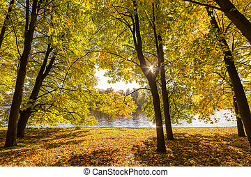 sunny landscape with trees