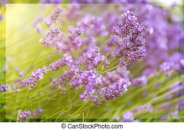 sunny lilac floral backgrounds