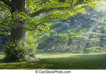 Sunny meadow in a mystical forest