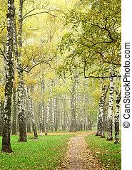 Sunny morning autumn mist in october birch grove