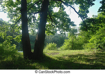 Sunny morning in a forest glade