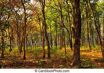 Sunny morning in dense forest