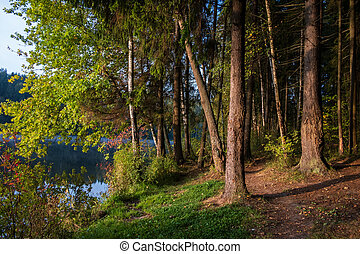 morning in the forest by the lake
