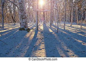 Sunny morning in the winter forest.