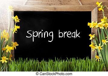 Sunny Narcissus, Chalkboard, Text Spring Break