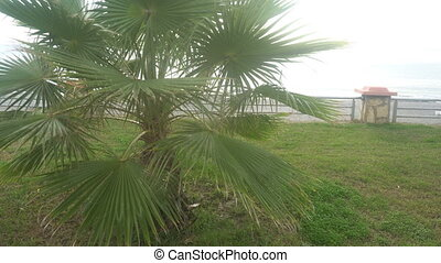Sunny palm tree.Palm tree in gentle tropical breeze.