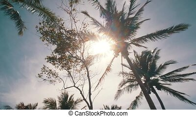 Sunny palm trees - Bottom view of beautiful coconut palm...