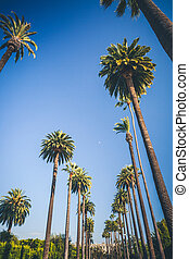 Sunny palms of Beverly Hills in Los Angeles