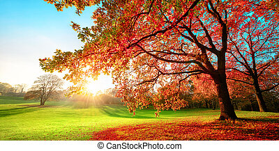 Sunny park in glorious autumn colors