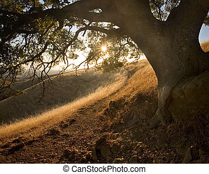 Path through beautiful, shady, hilly meadow on a sunny sunset in the East Bay Area of California