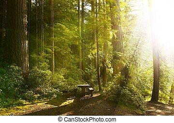 Sunny Rainforest