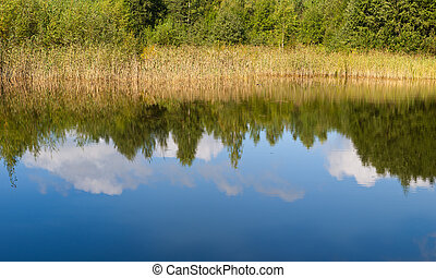 Sunny reflections in summer wood lake, panorama