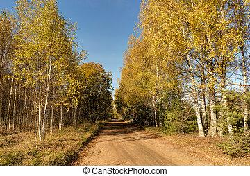 sunny rural autumn landscape