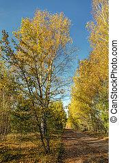 autumn landscape with dirt road