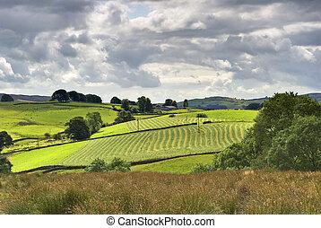 Sunny rural farmland scene