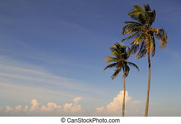 Sunny skies and palm trees