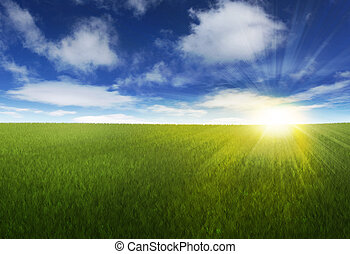 A setting sun over a green grassy field in the meadow