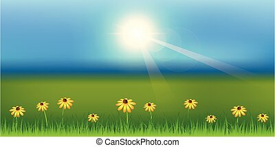 sunny spring background with daisy flower on green meadow