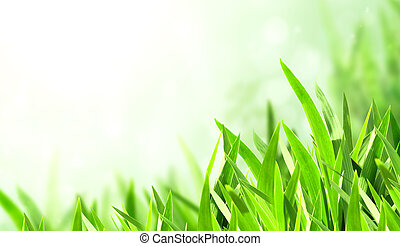 Sunny spring background with green grass