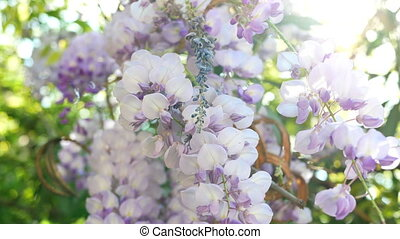 Sunny spring flowers - Spring blossom background. Beautiful...