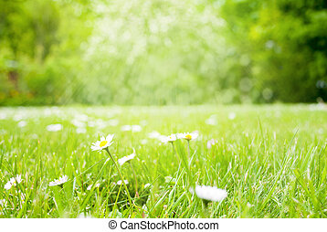 Sunny Spring Grass Meadow With Daisy Flowers