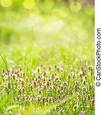 Sunny spring green grass and pink flowers background with bokeh