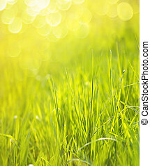 Sunny spring green grass background with bokeh