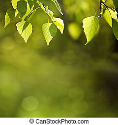 Sunny spring green leaves background
