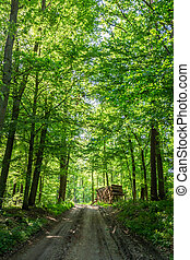 Sunny spring in the green forest, Poland