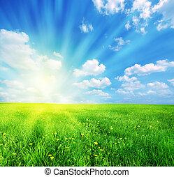 Sunny spring landscape - Green grass and blue sunny sky...