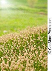 Sunny Spring meadow