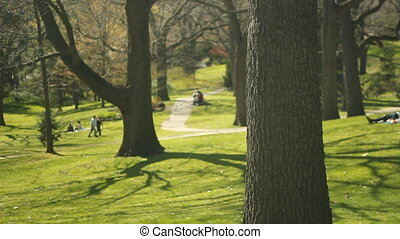 Sunny spring park.