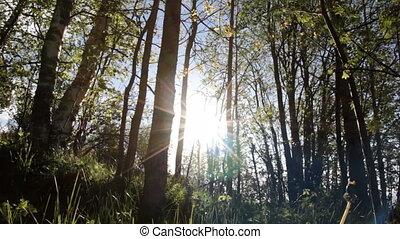 Sunny springtime forest