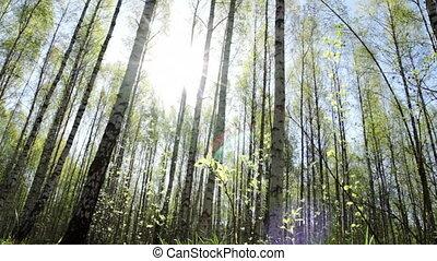 Slider shot in sunny springtime forest