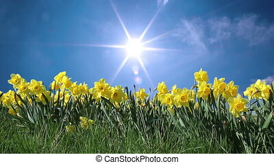 Sunny Springtime - Sunny springtime flowers